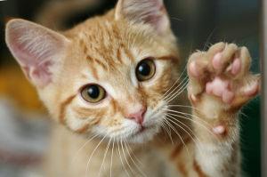 Il gatto e la zampa sinistra